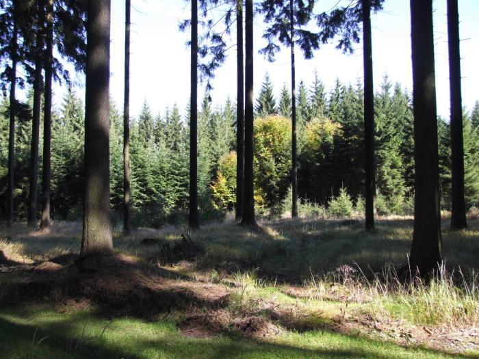 cachnov les a