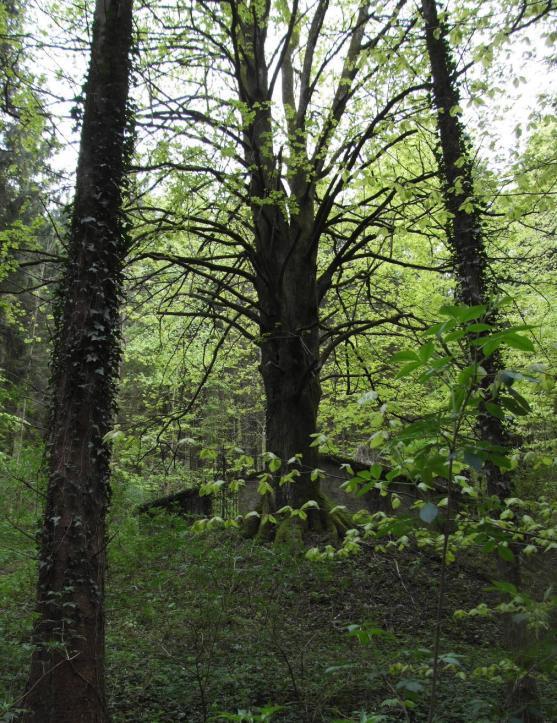 ebensee lesni hrobka 1