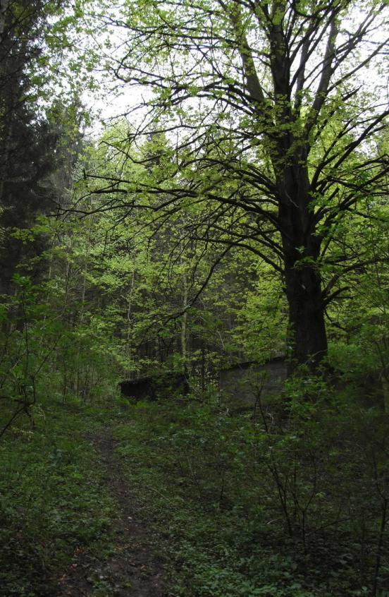 ebensee lesni hrobka 2