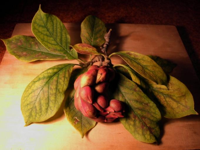 plod podzim