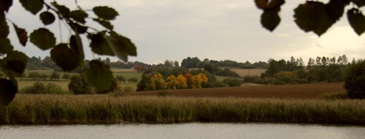 stromy na podzim 1
