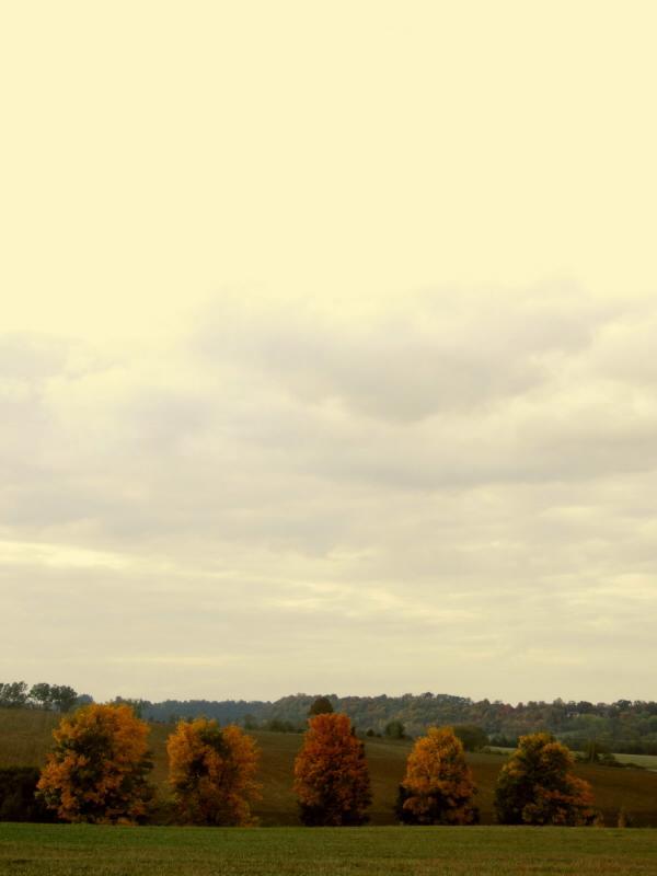 stromy na podzim 2