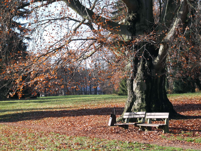 slatinany park 2