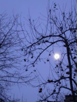vychazi mesic za sousedovou zahradou