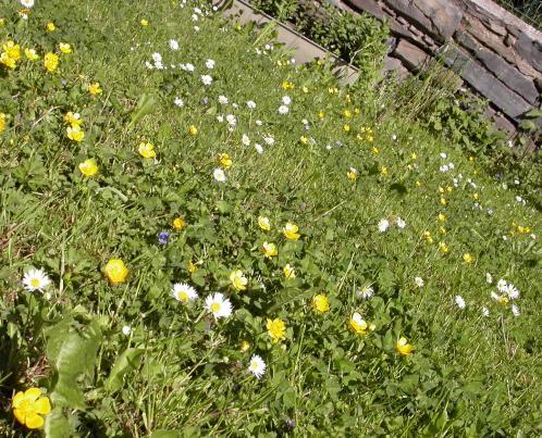 zahrada posekana pred tydnem