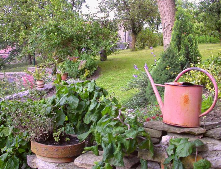 zahrada v lete zuzi 2007