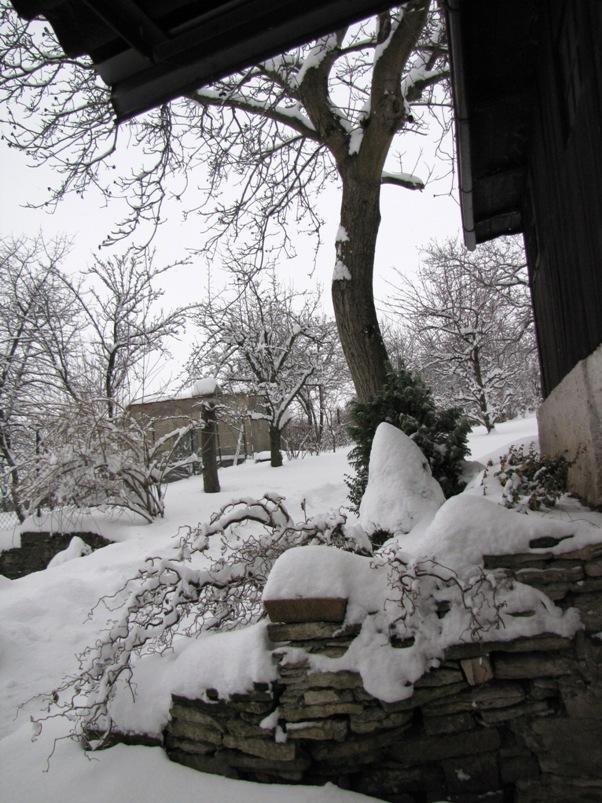 zahrada_2010_3
