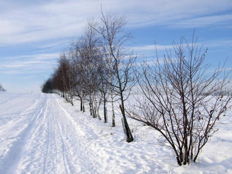 zamestem zima 2