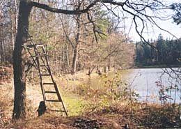 lesni-rybniky03